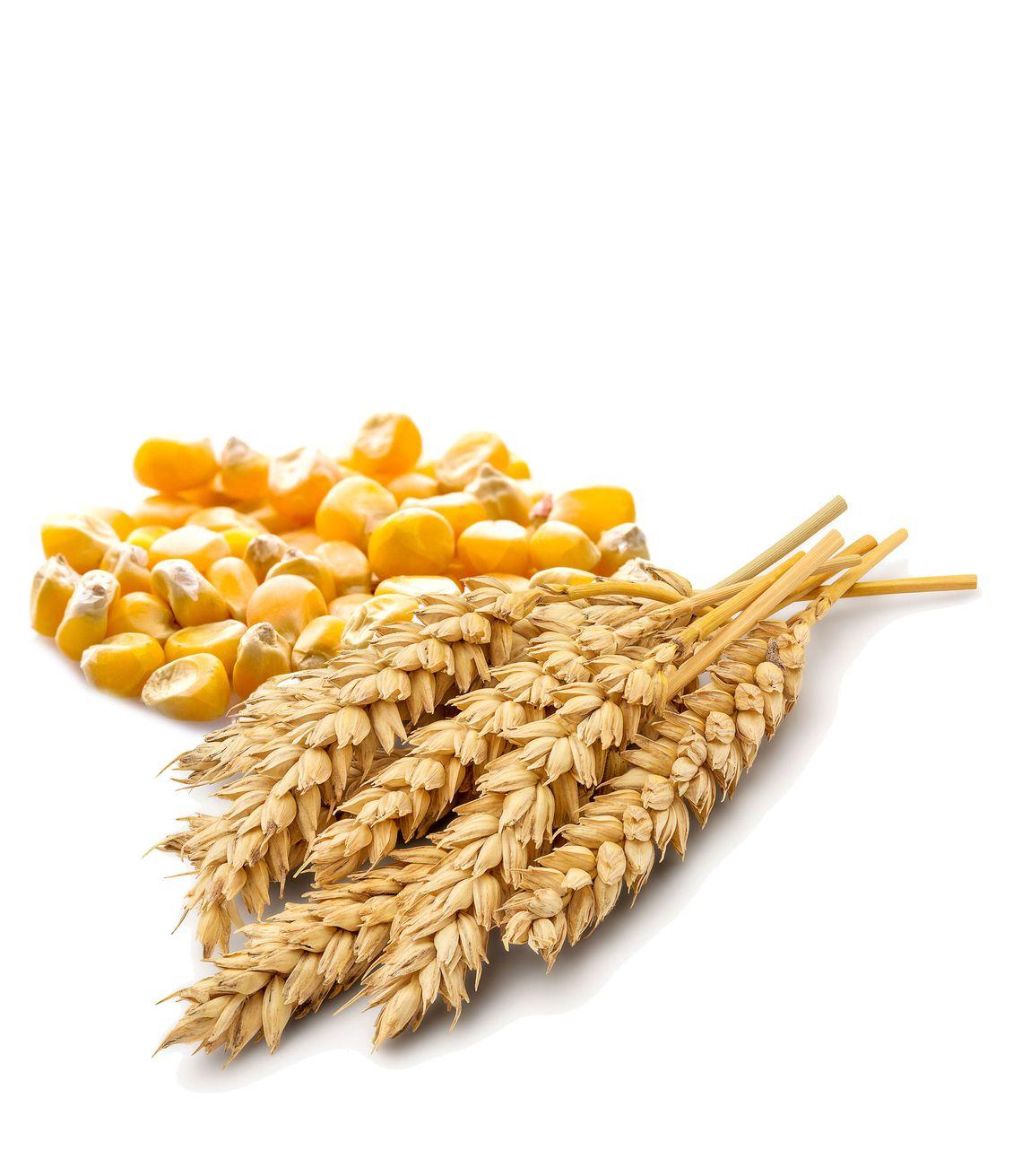 Nachhaltige Agrarprodukte aus Kukmirn im Burgenland